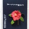 We Sell Camellia Japonica